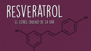 Resveratrol, el estrés bueno de la uva