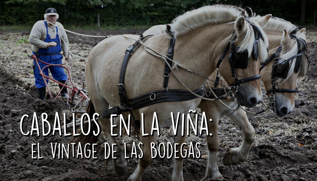 Caballos en la viña: el vintage de las bodegas
