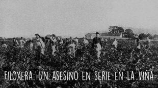 Filoxera: Un asesino en serie en la viña