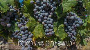 tempranillo-blog1050px_grande