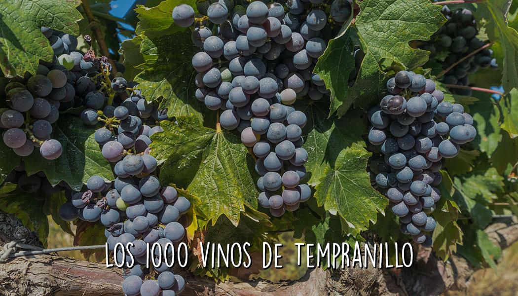 Los 1.000 vinos de Tempranillo