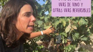 Uvas de mesa y uvas de vino