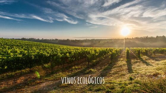 descubre vinos ecológicos en vinistas