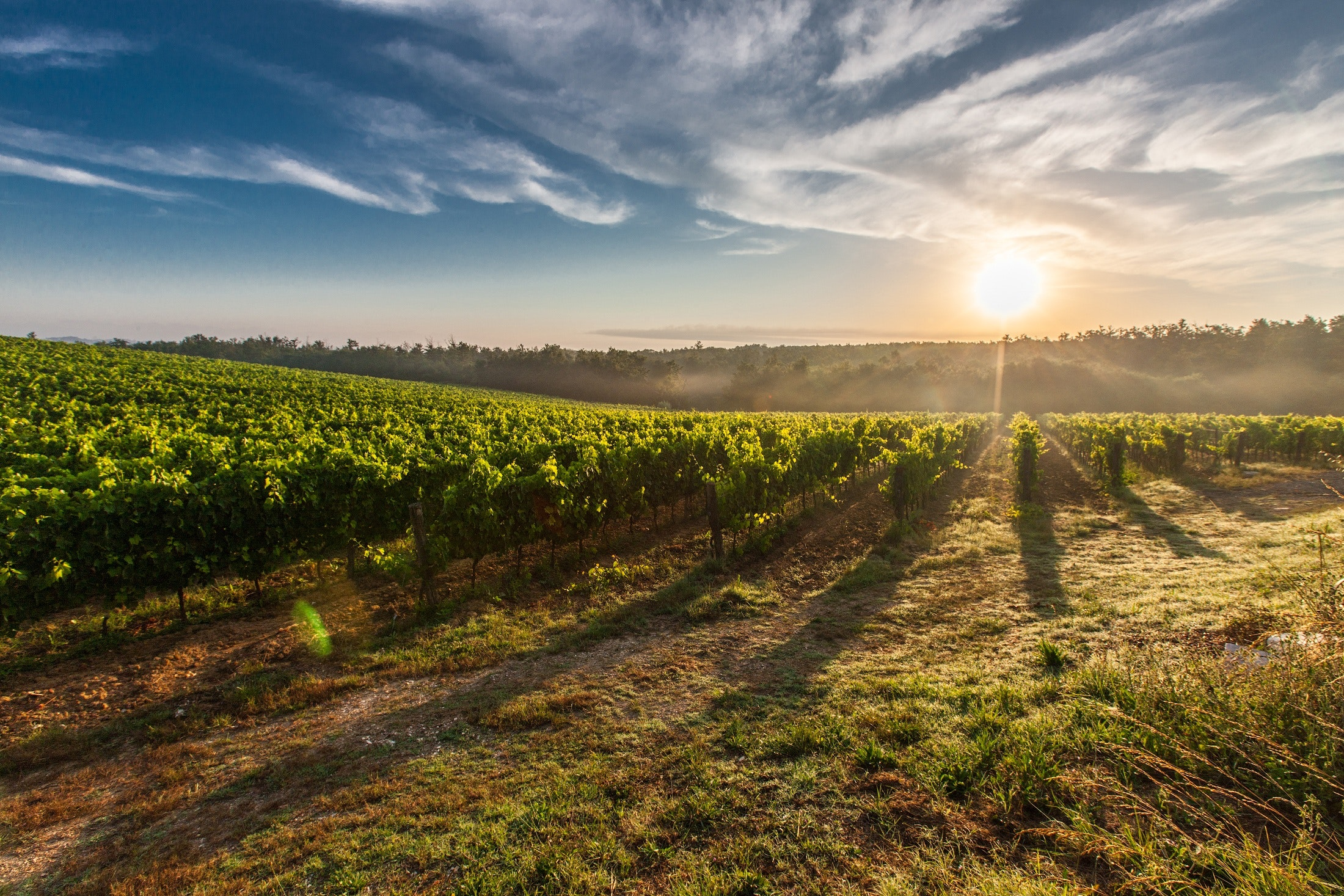Cómo es y cómo no es el vino ecológico, biodinámico y natural