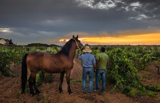 vender vino en vinistas